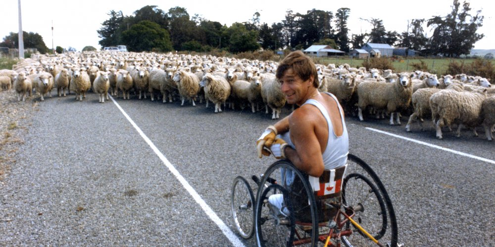 Rick Hansen's path is blocked by sheep while wheeling.
